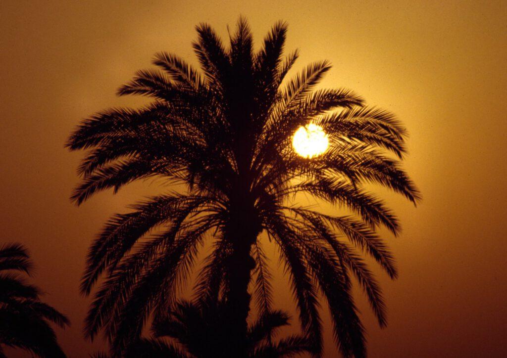 Ägypten, Palme und Sonnenuntergang