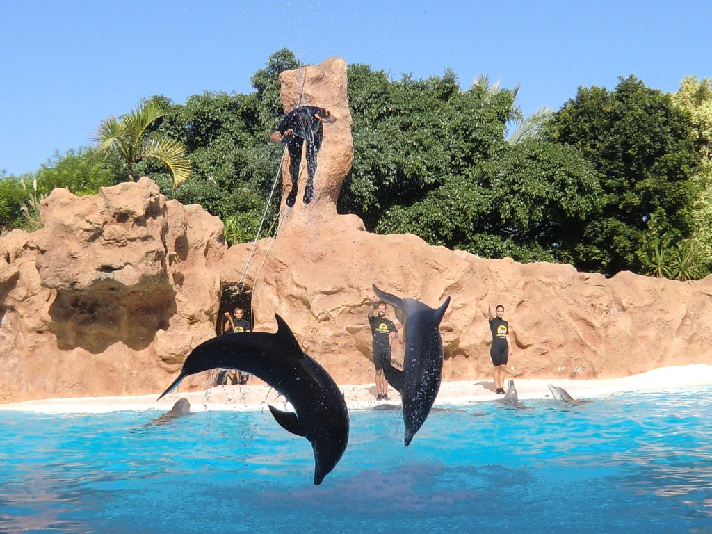 Delphine im LoroParque auf Teneriffa