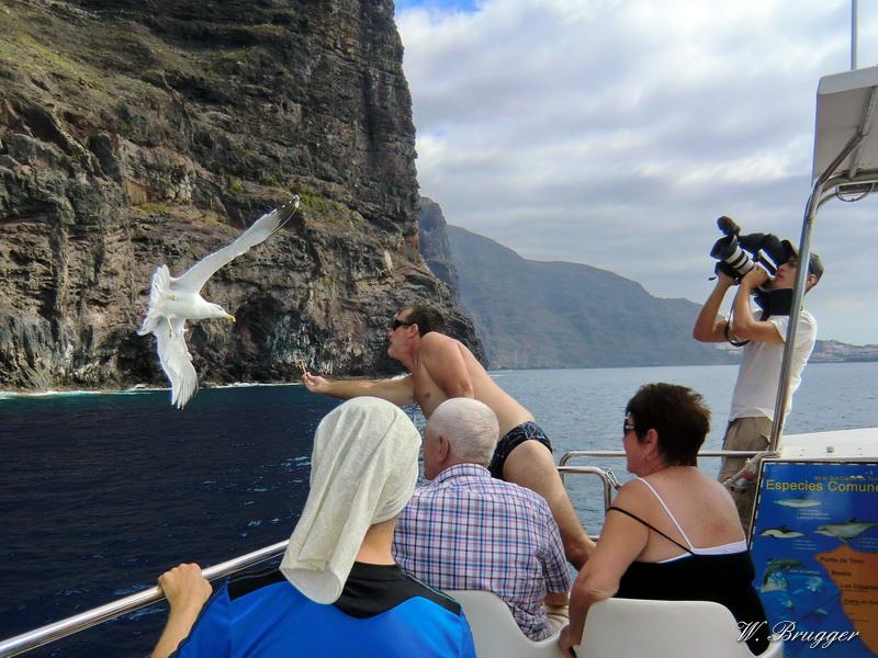 Ebook Erlebnis Teneriffa - Vulkane, Orcas und Delphine. Urlaub auf der größten kanarischen Insel