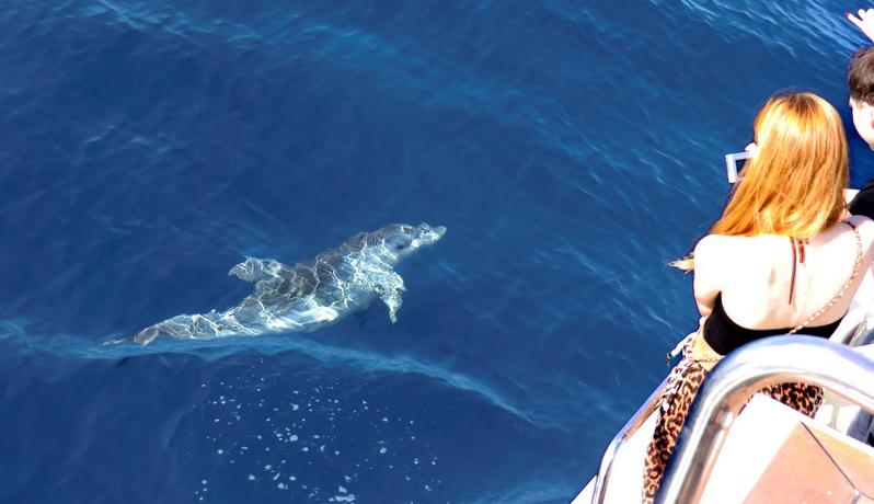 Teneriffa: Wale und Delfine. Walbeobachtung vor Los Gigantes
