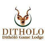 Ditholo Game Lodge, Südafrika