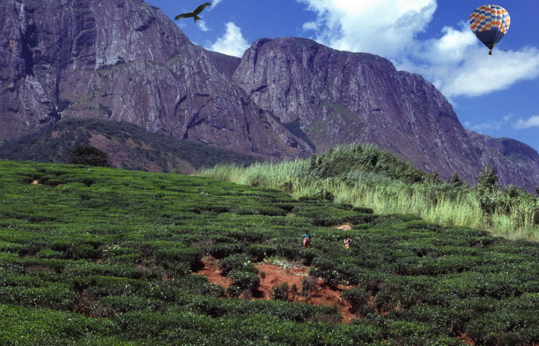 heißluftballon milan Tee-Plantage Malawi-Scan-04