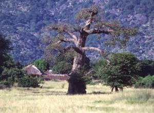 mag1 Malawi-Scan-002