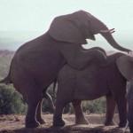Südafrika von Kapstadt bis Johannesburg: 10  Highlights