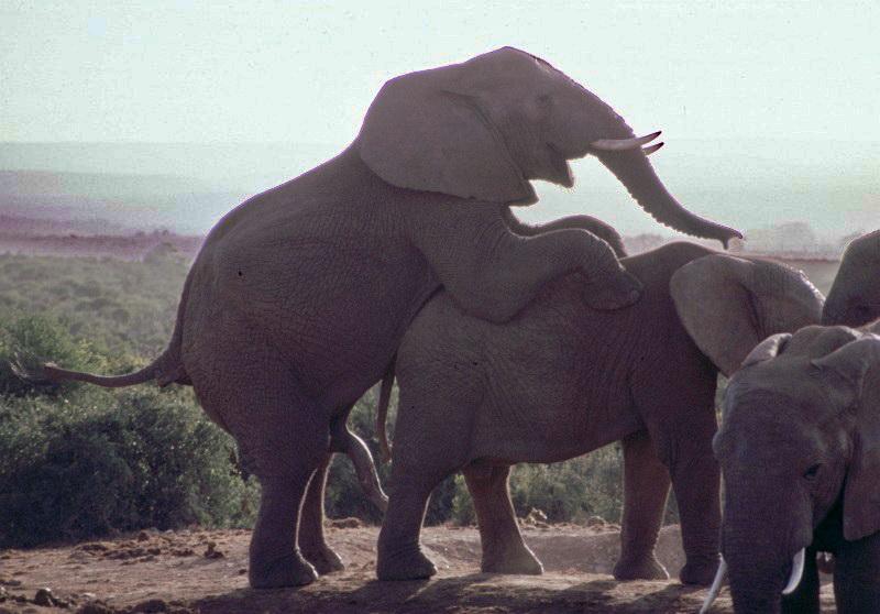 Südafrika Garden Route Addo Elephant Park Elefantenhochzeit1