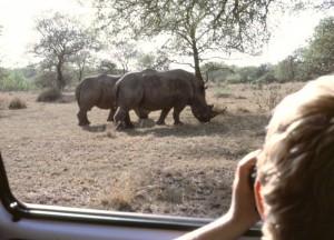 Südafrika Natal Nordküste Umfolozi Moses beobachtet 2 Nashörner vom Auto aus - Gegenlicht