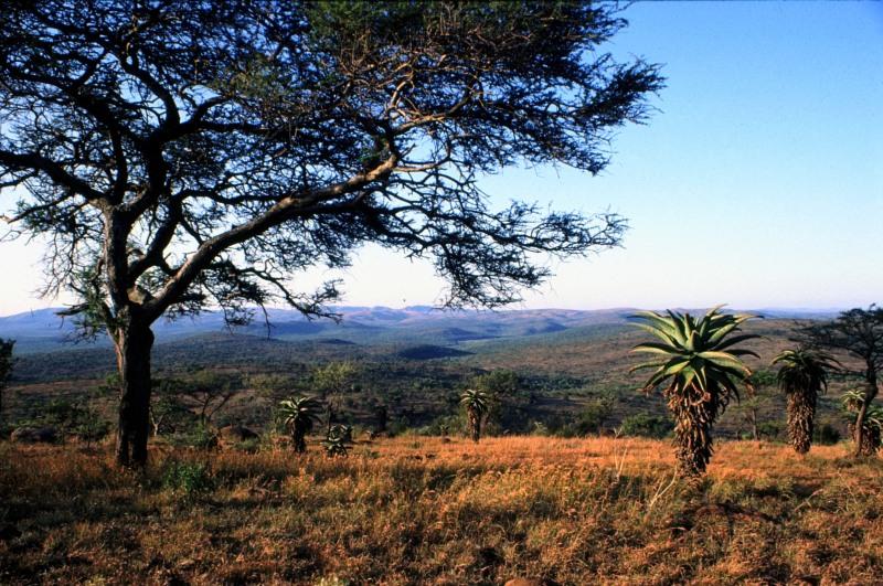 Südafrika Umfolozi Nationalpark Blick über Aloenbestand