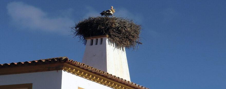 Portugal Titelbild - Storch