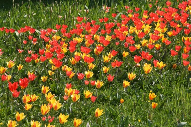 Blütenpracht im Frühling auf der Insel Mainau, Bodensee