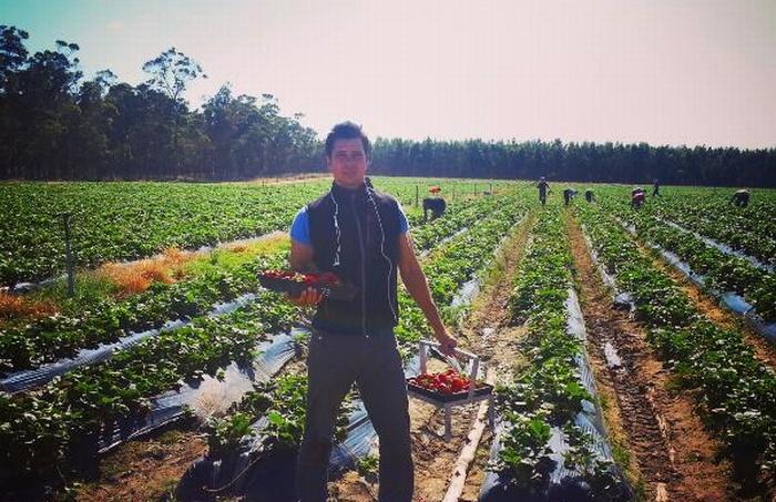 Stefan Schüler beim Erdbeerpflücken in Australien