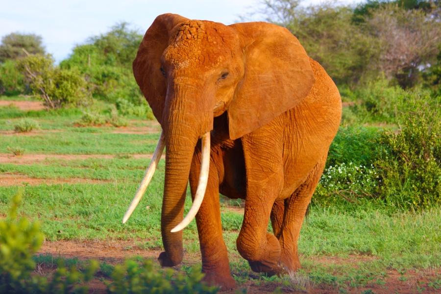Elefant -  by Alessandro Desantis - gefunden bei unsplash.com