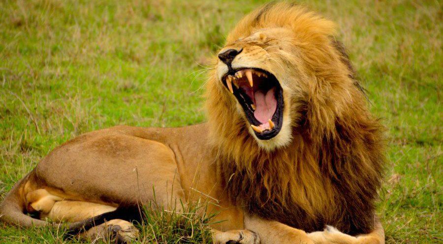 Südafrika: Uuuaaa! Entzugserscheinungen. Wie ohne Safari leben?