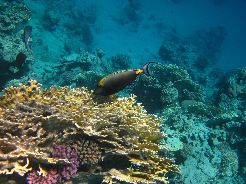 Korallenriff Riff Ägypten