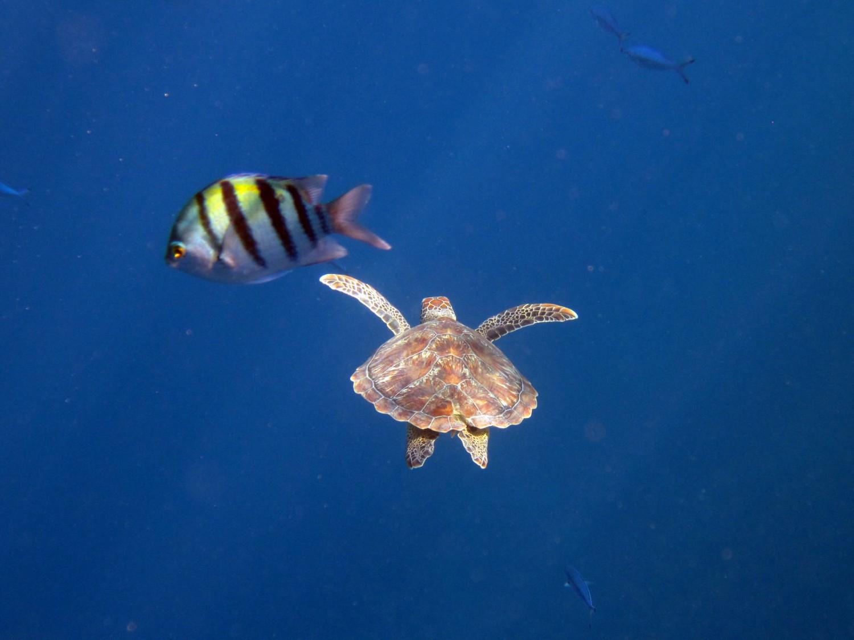 Ägypten. Schnorcheln am Korallenriff: Coraya Bay, Rotes Meer.
