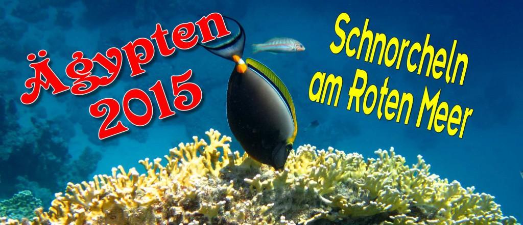 Titelbild zum Beitrag Äypten 2015 - Schnorcheln am roten Meer