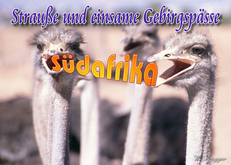 Titelbild zum Beitrag:Südafrika, kleine Karoo: Strauße und einsame Gebirgspässe