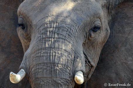 Fotosafari mit Jaci's Lodge, Madikwe Game Reserve, Südafrika. Foto: E. Brugger