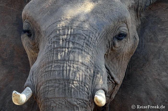 Foto-Safari in Botswana: Abenteuer Elefanten Lodge