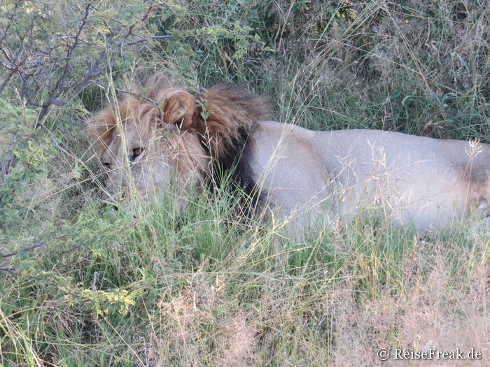 Safari in Südafrika: Game Drive im Dinokeng Wildreservat, Mongena Game Lodge