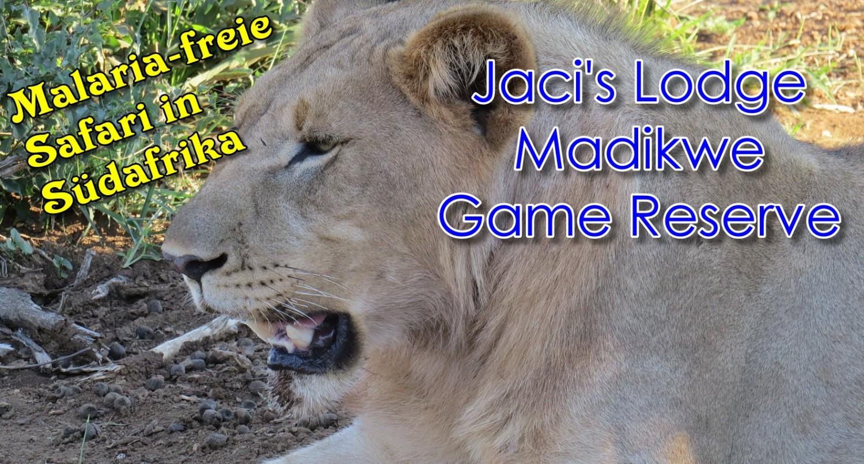 Südafrika, malariafrei: Spannende Safari im Madikwe Game Reserve
