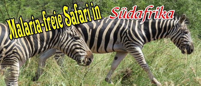 Malaria-freie Safari in Südafrika: Ein erster Überblick