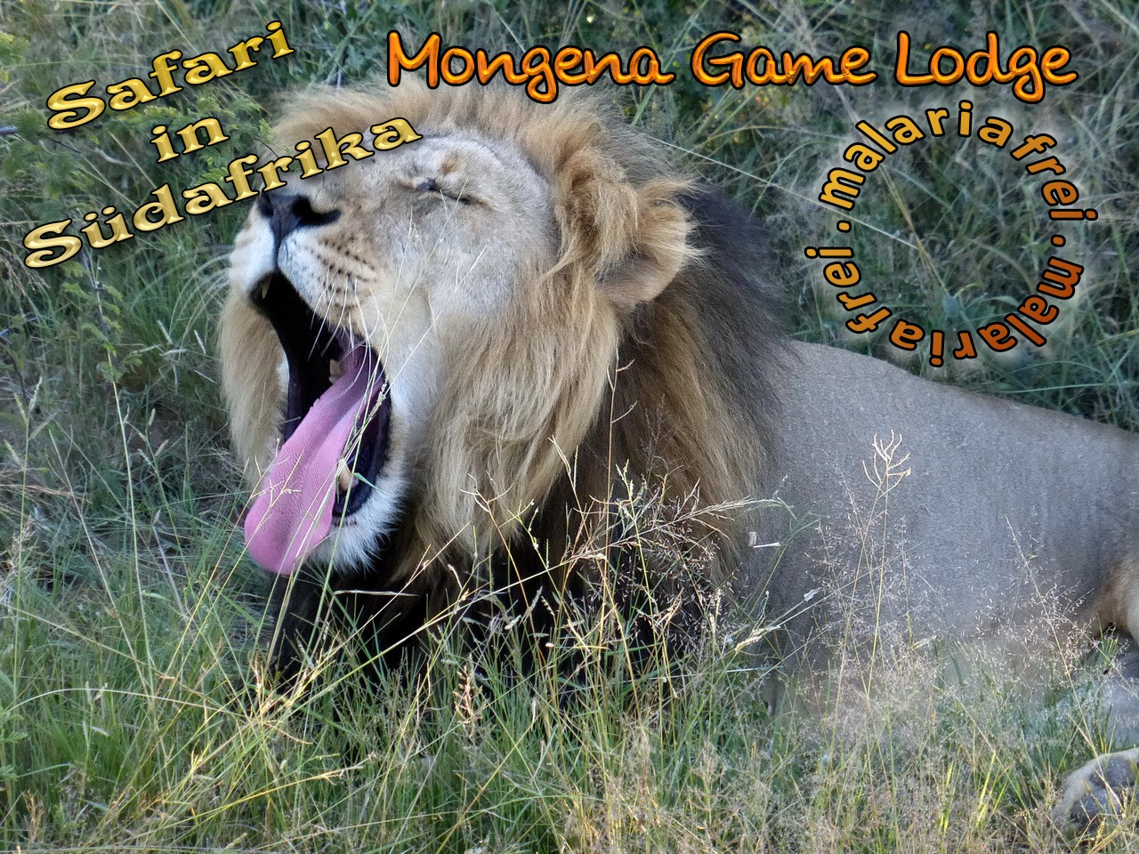 Südafrika Safari, malariafrei: Mongena Game Lodge