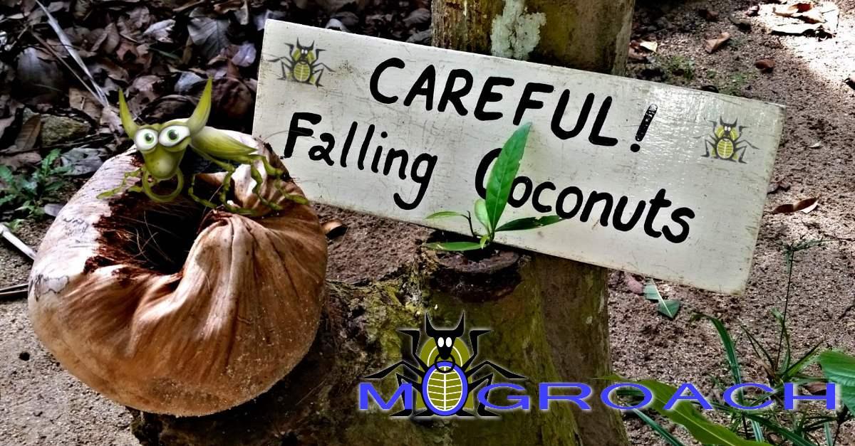 Vorsicht! Fallende Kokosnuss. Von einem, der sie überlebt hat