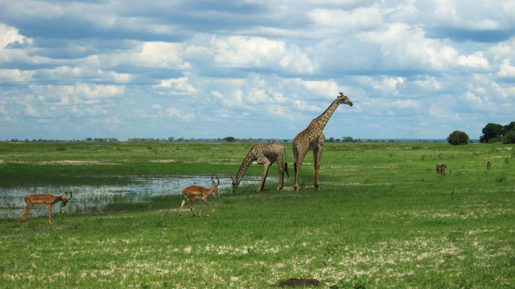 Botswana: Chobe Nationalpark – Alle Tipps zur Riverfront