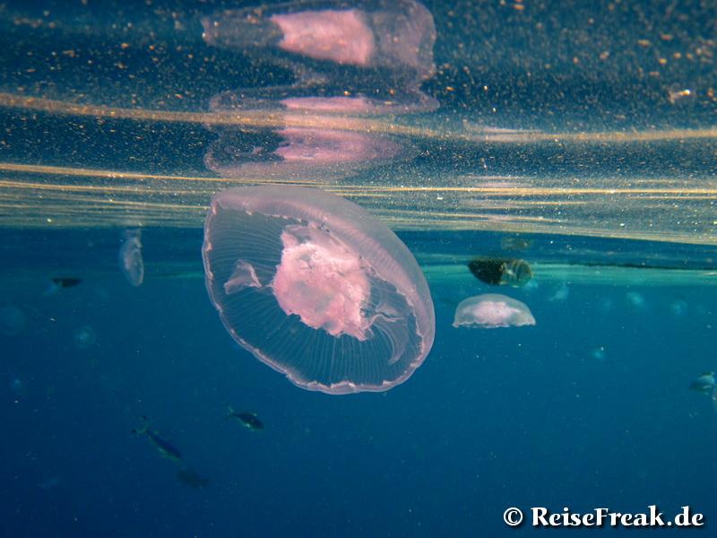Ägypten, Sharm el Sheikh: Paradies für Unterwasser-Fans