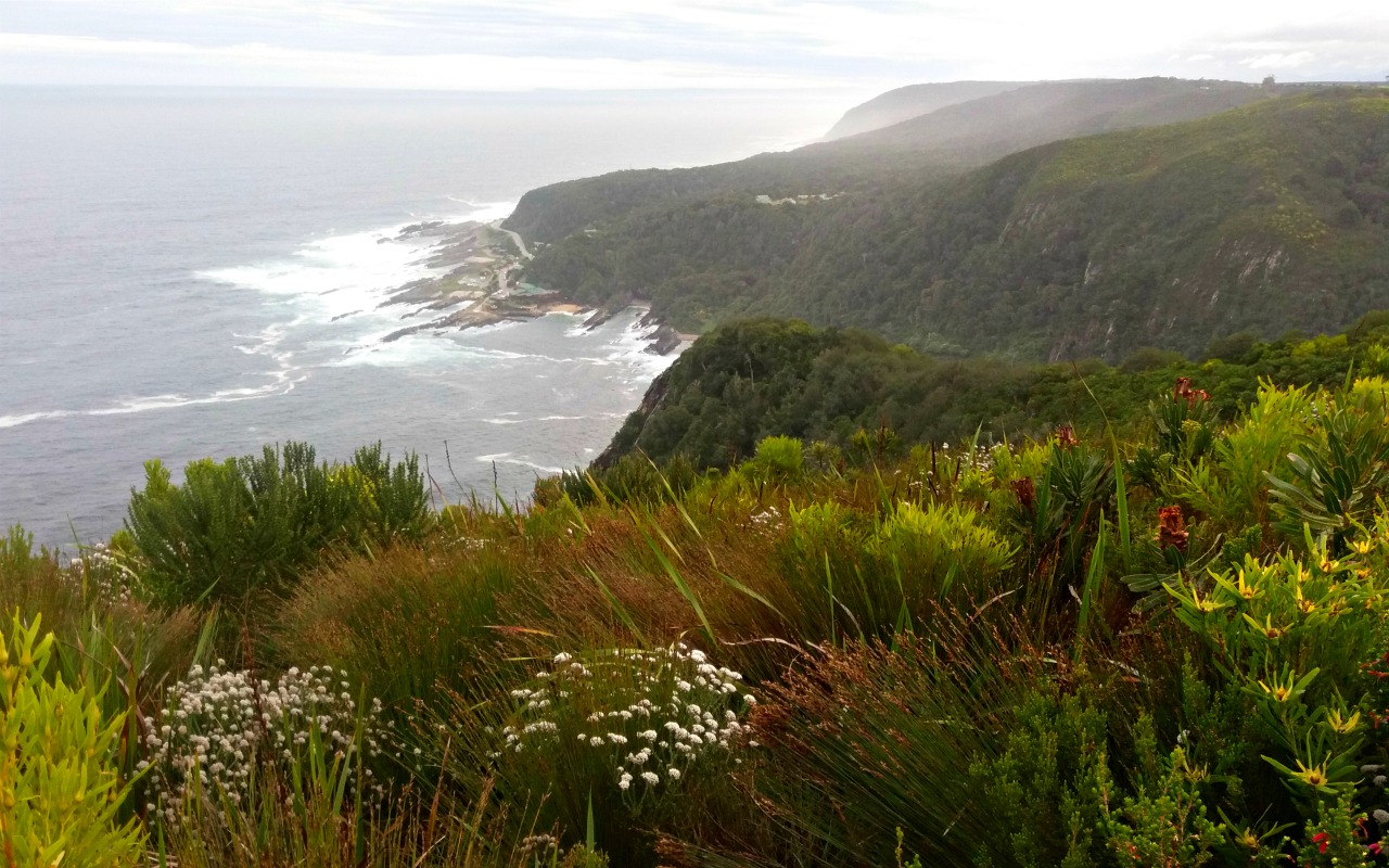 Südafrika, Garden Route:  Viel Grün im Tsitsikamma National Park