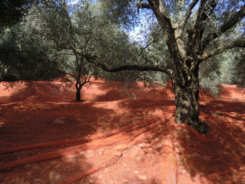 Griechenland: Geschichte erleben bei einer Reise über die Insel Kreta