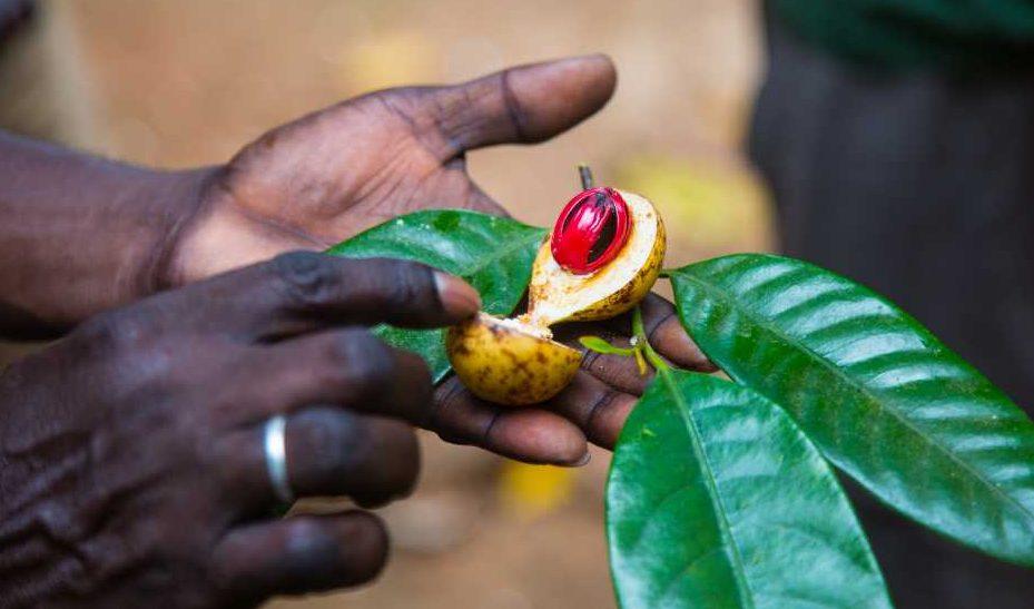 Tansania: Sehnsucht nach der Gewürzinsel Sansibar
