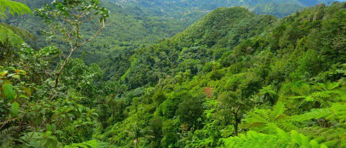 Die Karibik-Insel Grenada bietet neben Stränden auch reichlich Regenwald. Foto Kyle Wicomb