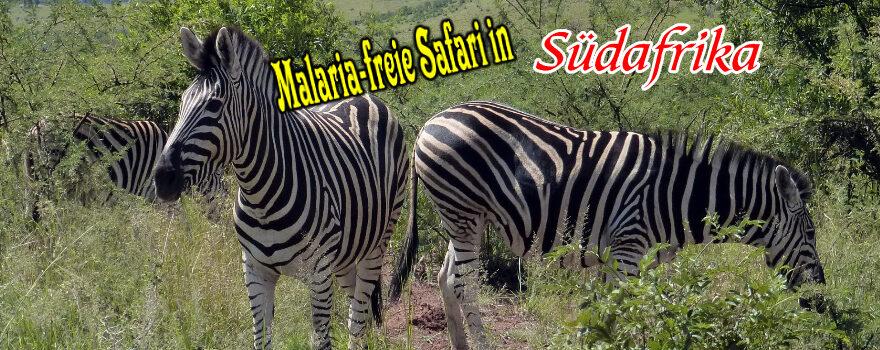 Malaria-freie Safari in Südafrika - Titelbild
