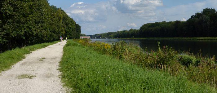 Auwald bei Dillingen an der Donau