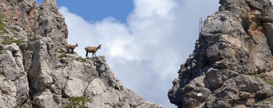 Nein, heute kein Klettersteig! – Bild Alwin Pelzer