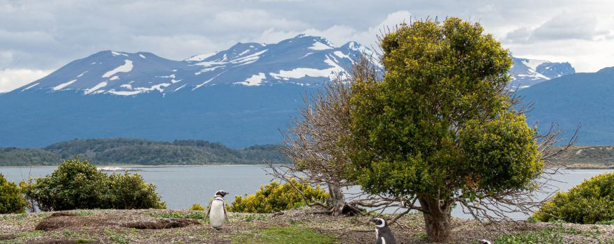 Ushuaia, Feuerland, Argentien, Foto by dmitriy-serafin-mxZLNaSbCfw-unsplash