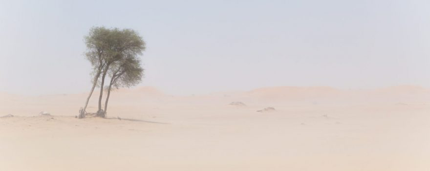 Sandsturm. Photo by Robert Metz