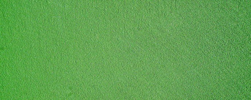 grün. Foto von Jason Dent