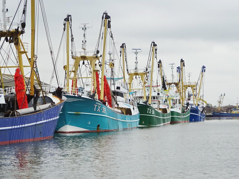 Texel, Krabbenfischer, Hafen Oudeschild
