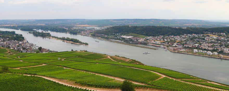 Weinberge am Rhein bei Rüdesheim - manfredrichter / Pixabay
